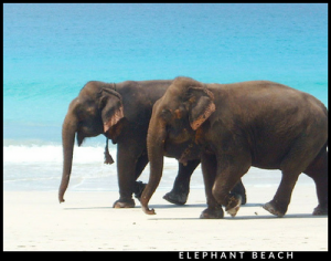 Elephant Beach : Andaman